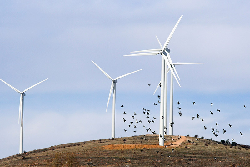 Windfarm gap-filling radar helps mitigate avian turbine strikes